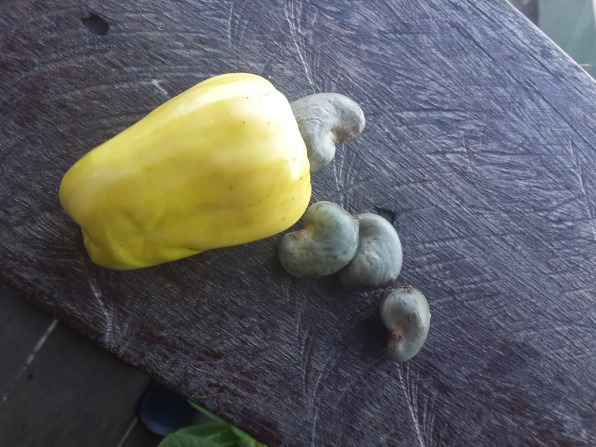 A yellow cashew